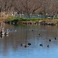 写真: 木曽川水園 (12)