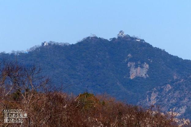 写真: 木曽川水園 (24)金華山の岐阜城