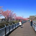 Photos: 春風