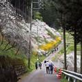 Photos: 桃の里入り口