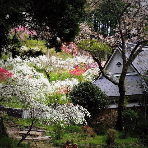 古民家と枝垂れ桃