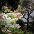 写真: 古民家と枝垂れ桃