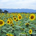 写真: 夏の元気