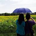 写真: 日傘