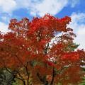 写真: 秋空の下で