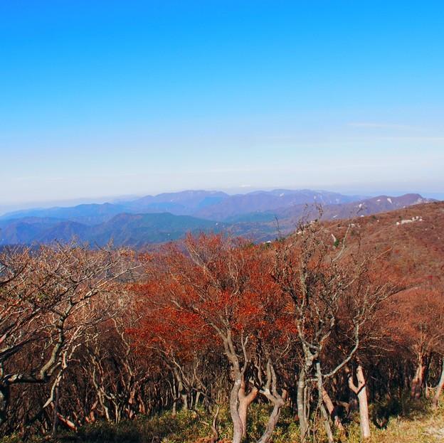 写真: 冬前青空