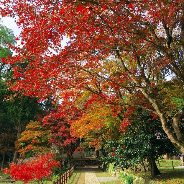 鶏足寺への道