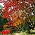写真: 鶏足寺への道
