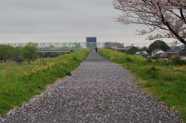 松戸の桜 (8)