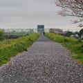 写真: 松戸の桜 (8)