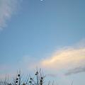 写真: おはよう、今朝のお月様(^w^)