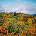 写真: 栗駒山の秋