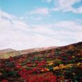 写真: 秋色の栗駒山
