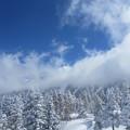 写真: 美しい冬