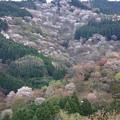 吉野山・一目千本