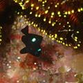 写真: 大瀬崎:湾内(オリンパスTG-3マクロモード)