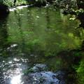Photos: 上高地散策「湧き水」