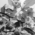 写真: 山に咲く花ー2