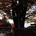 写真: 盛岡八幡宮 07