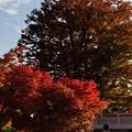 写真: 盛岡八幡宮 09