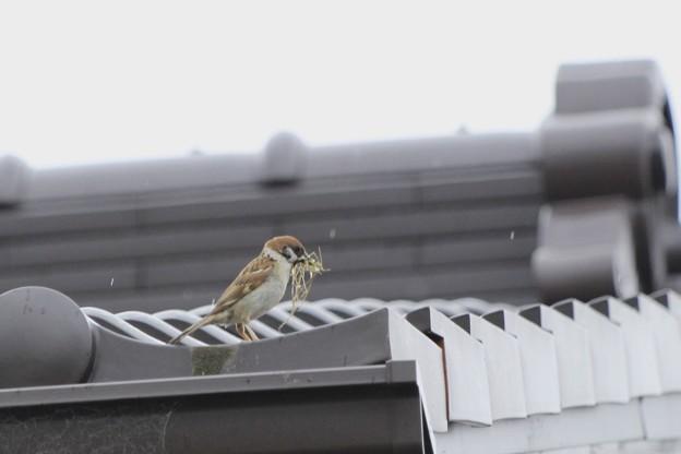 巣作り~♪