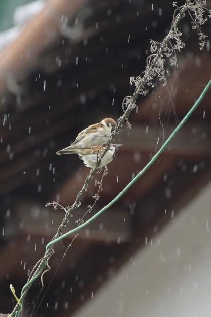 雨の中~♪