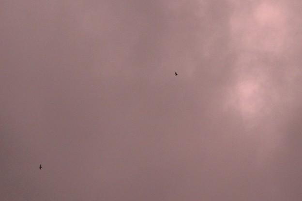 赤い空にコウモリ~♪