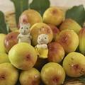 写真: きのうのあさの大収穫~♪