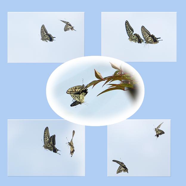 蝶々2~♪