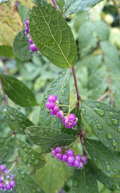 写真: 小紫