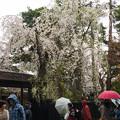 写真: 角館武家屋敷-01386