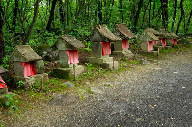日本の夏-01565