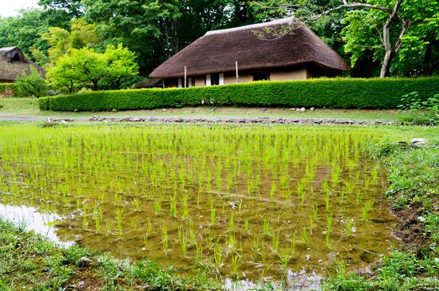 Photos: 日本の夏-01578