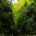 写真: いわき夏井川渓谷-13