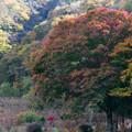写真: いわき夏井川渓谷-71