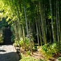 写真: 鎌倉2-30
