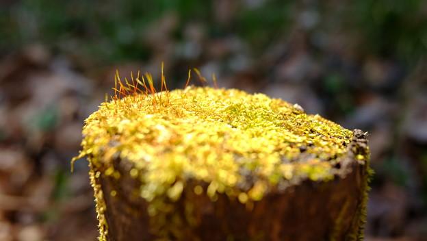 黄金テーブル