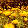空に向かって咲く花1
