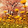 空に向かって咲く花4
