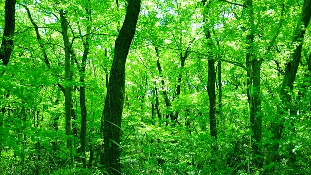 写真: 新緑の山
