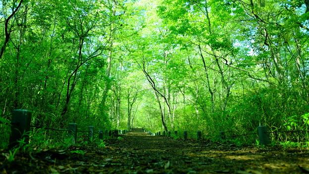 樹林エリア散策