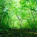 写真: 樹林エリア散策