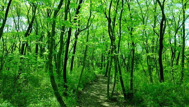 写真: 樹林