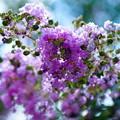 写真: 花。。。