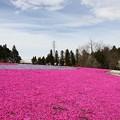 ピンクのカーペット