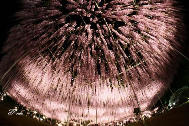 夜空に浮かぶ大輪の花
