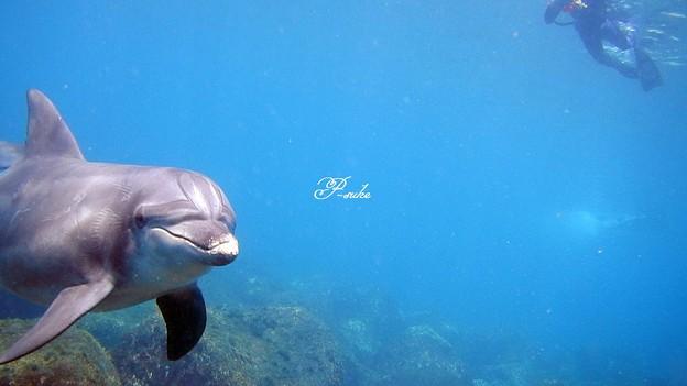 写真: イルカ