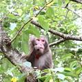 写真: 何故かお猿?