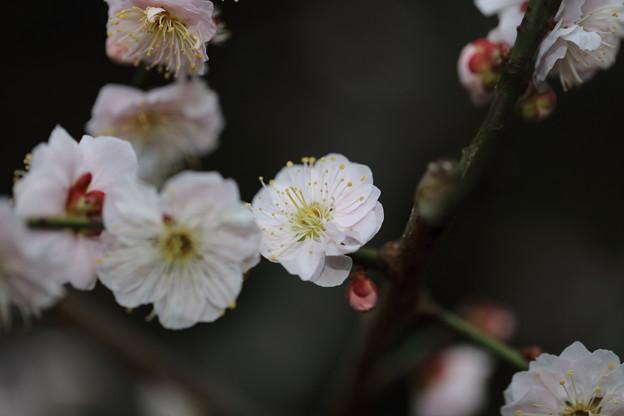 Photos: 東山動植物園25