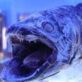深海魚水族館20